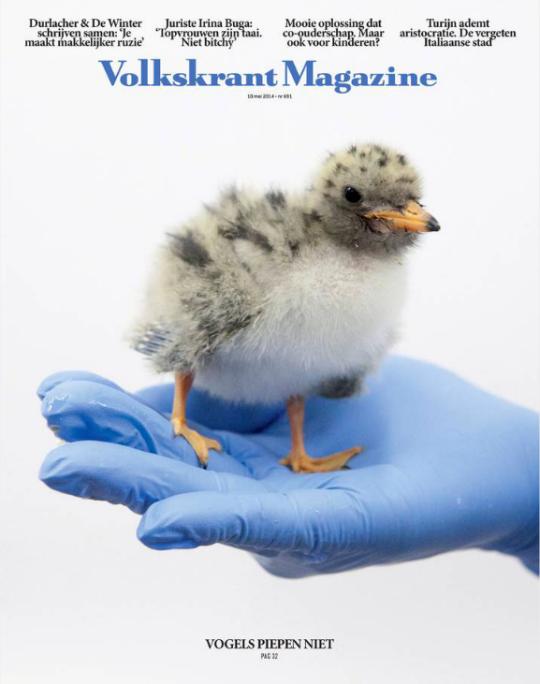 Echte vogels huilen niet vk magazine